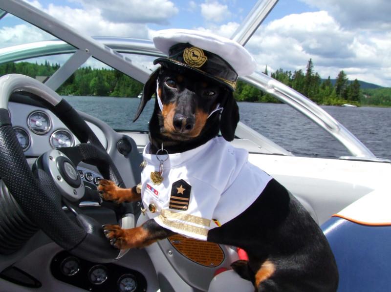 dachshund-captain-boat