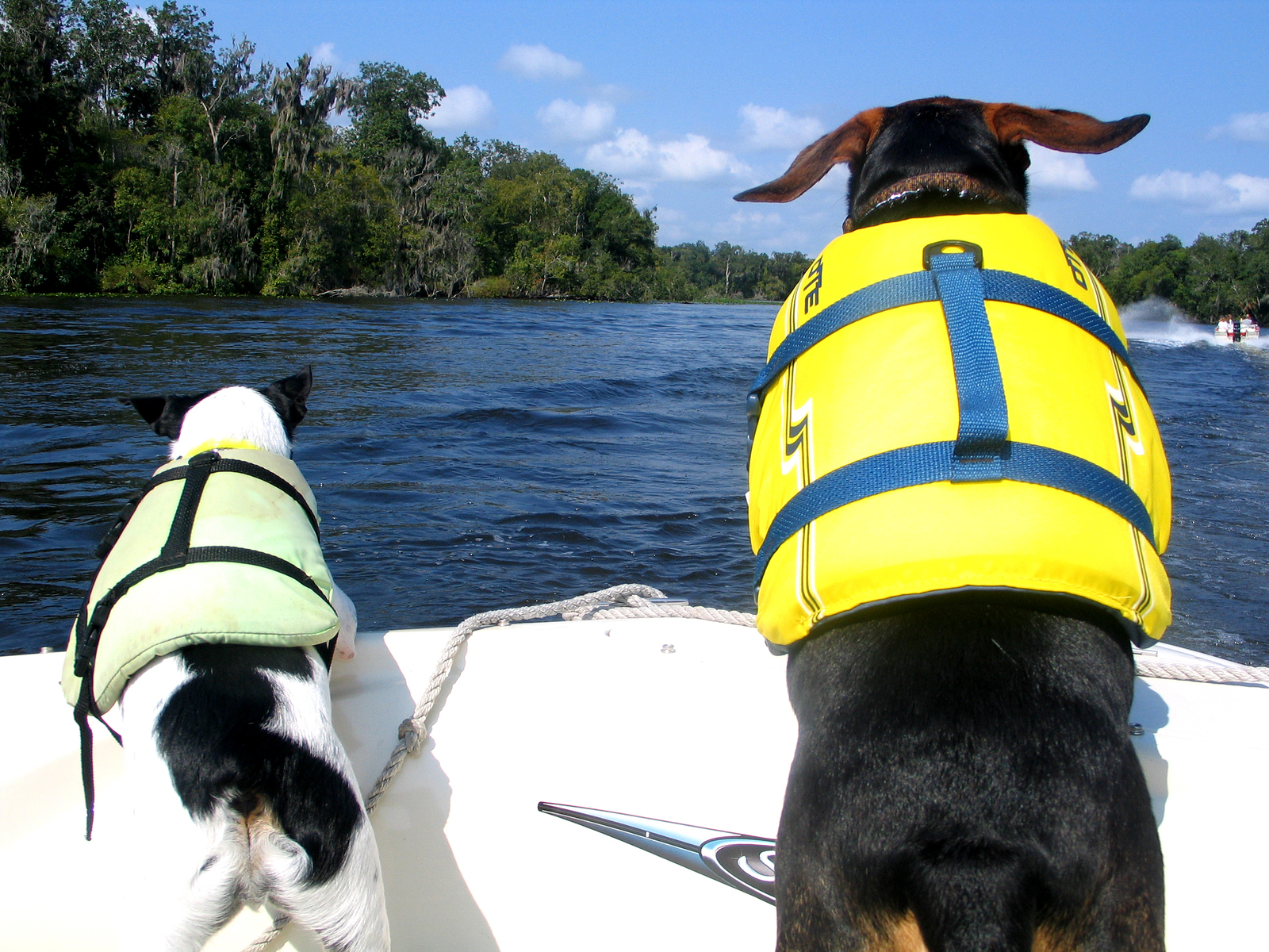 dogs on a boat with life vests in the front of a boat in the wind having fun