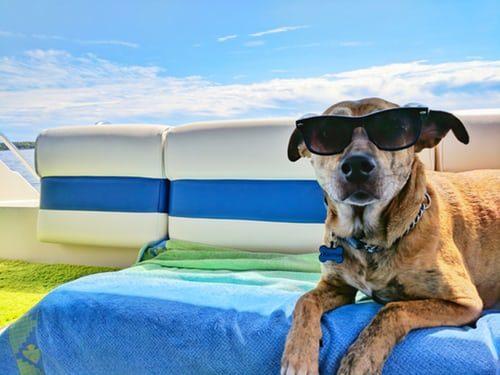 Vacanze al mare con il cane