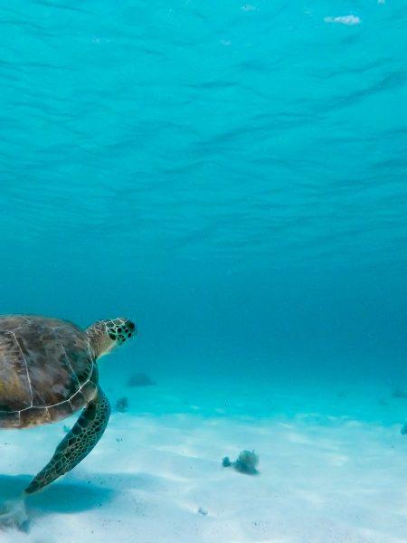 Navigare in modo ecosostenibile significa anche preservare la fauna marina